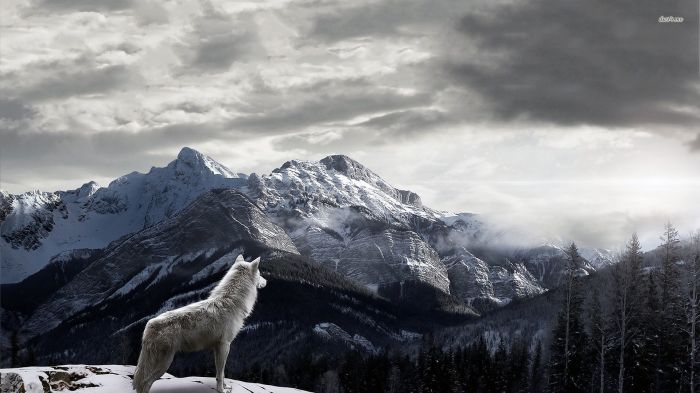 44632-white-wolf-looking-at-the-forest-1920x1080-animal-wallpaper (1)